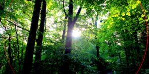 Solling - Waldgebiet des Jahres 2013